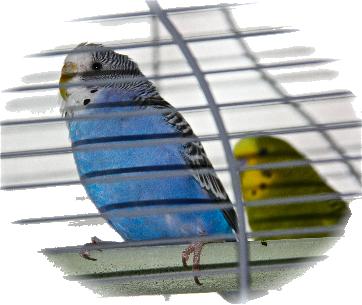 Wir Vögel…